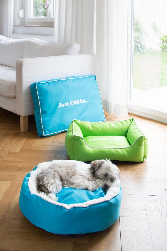 Hundebetten-4789.jpg